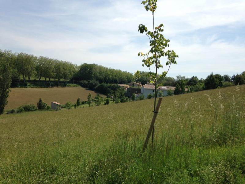 Programme immobilier neuf à Nailloux (31560)
