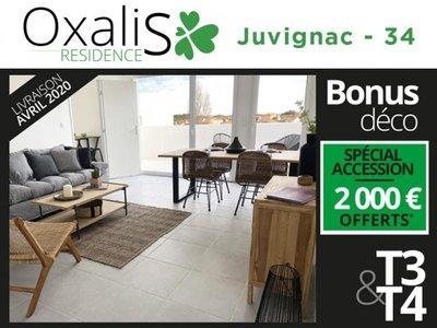 Oxalis - Juvignac (34990)